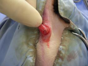肛門腺 オペ後