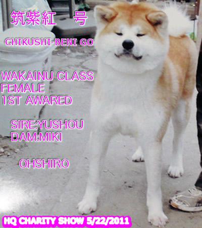 CHIKUSHIBENI511_20111129073749.jpg