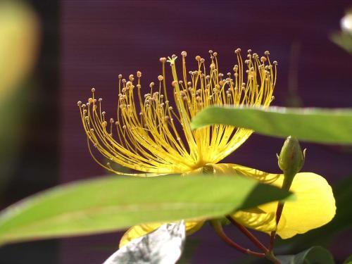 黄色い花2