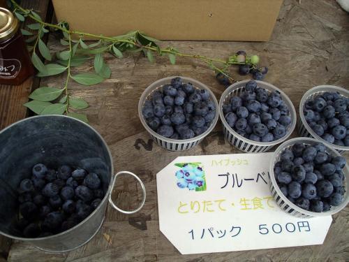 ブルーベリー500円