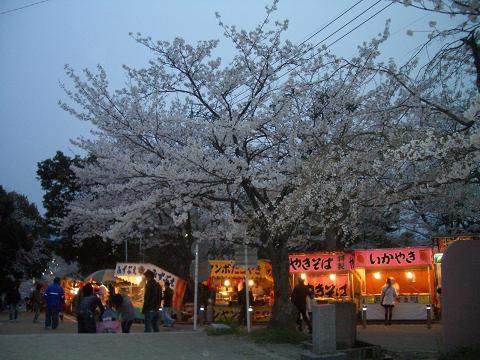 西公園の桜12