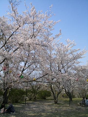 飯塚でもお花見♪
