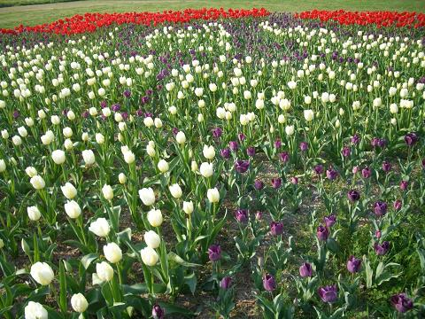 春はお花がいっぱい♪