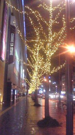 リバーウォーク前の木