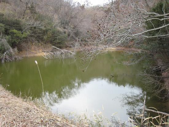 2008/02/07府中湖西高速高架下、二段の野池(上)