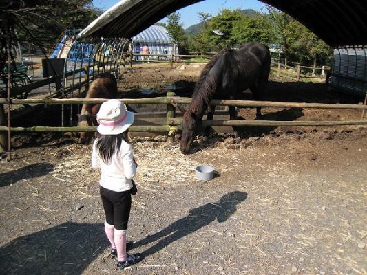 2008/10しおのえふじかわ牧場馬