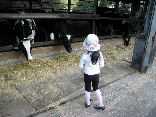 2008/10しおのえふじかわ牧場牛1