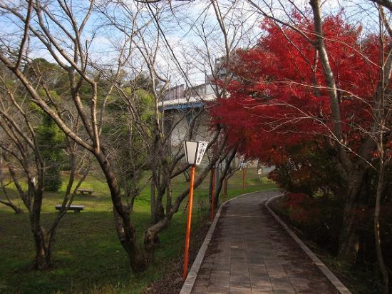 2008/1201滝宮公園紅葉1