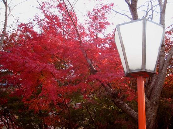 2008/1201滝宮公園紅葉2
