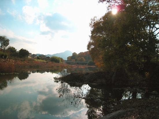 2008/1201滝宮公園紅葉3