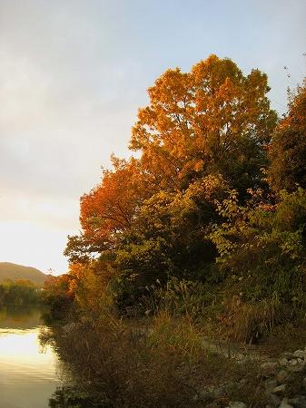 2008/1201北條池からの流れ込み紅葉