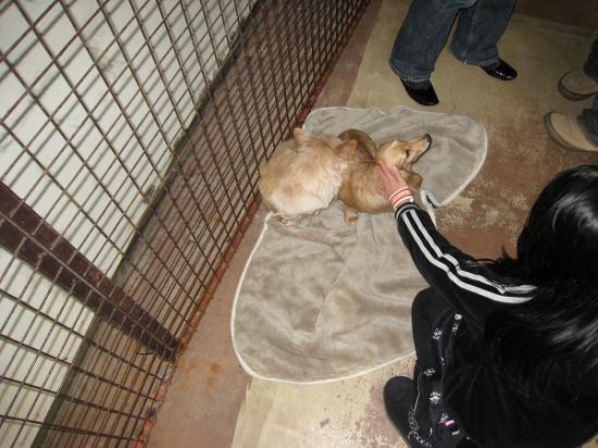 2009/01レオマ ワンワンパーク犬