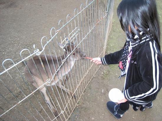 2009/01レオマ アニマルパークワラビー