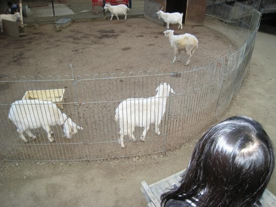 2009/01レオマ アニマルパークヤギ