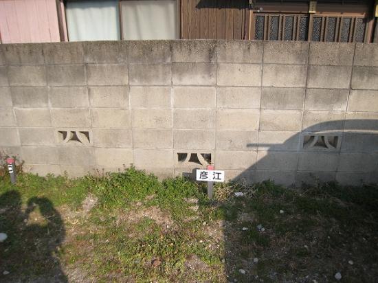 2009/01彦江うどんP2