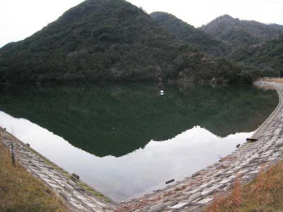 2009/01/05大内ダム近くの野池1