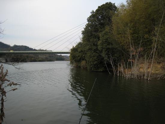 2009/01/26府中湖高速下から竹