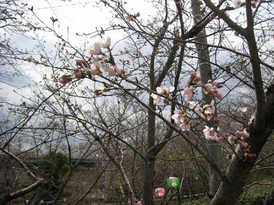 2009/03/23滝宮桜2