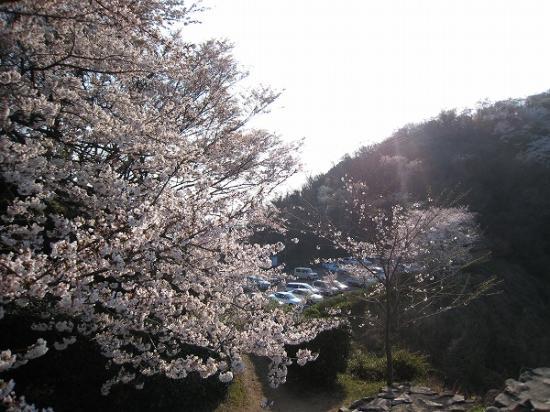 2009/04/06紫雲出山の桜1
