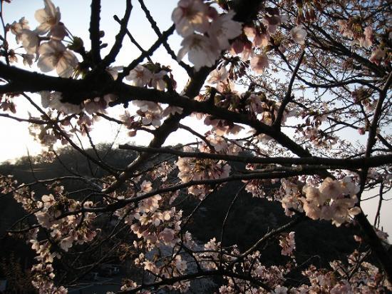 2009/04/06紫雲出山の桜5