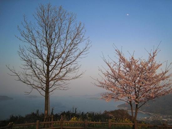 2009/04/06紫雲出山下の桜