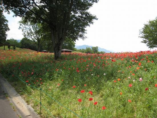 2009/6月/まんのう公園レンタサイクルからの風景1