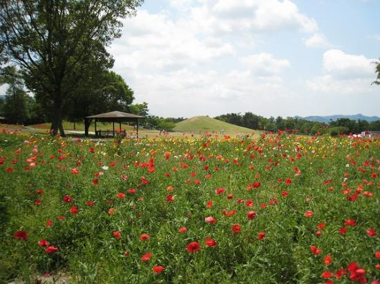 2009/6月/まんのう公園レンタサイクルからの風景2