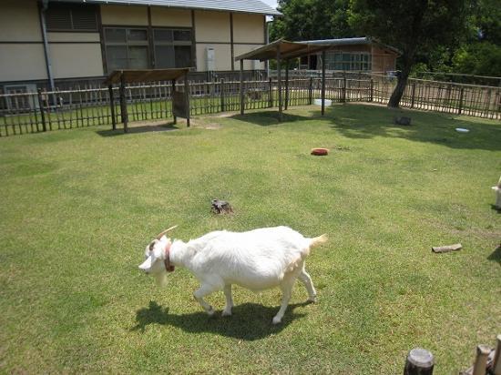 2009/6月/まんのう公園ヤギ