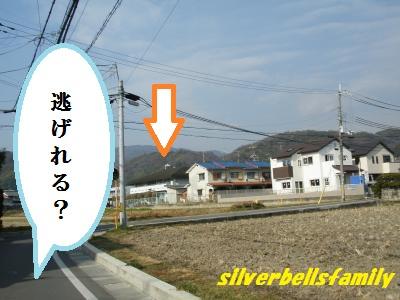 P2050002.jpg