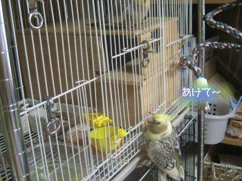201025n-nana3.jpg