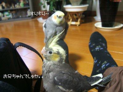 201121n-waka1gou2.jpg