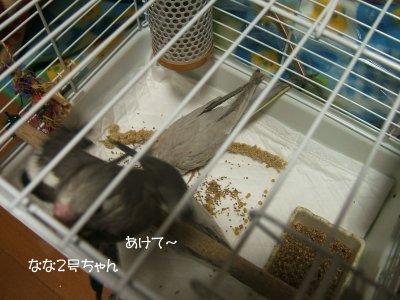 201126n-hina2.jpg