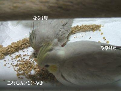 201126n-nanahina.jpg