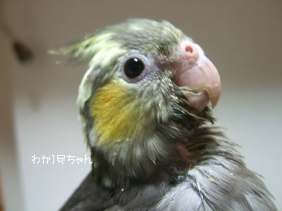 201126n-waka1gou.jpg