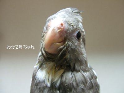 201126n-waka2gou.jpg