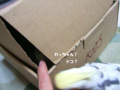 210305n-4.jpg