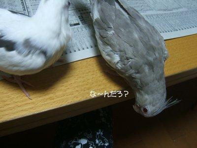 210611hina2.jpg
