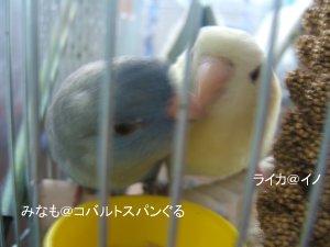 saku20090219-2.jpg