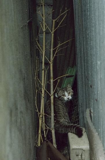 ふりかえり猫_あっぷ