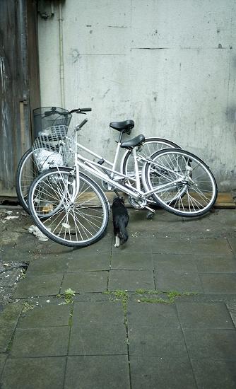自転車と黒