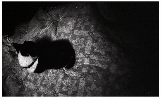 猫とフトンと
