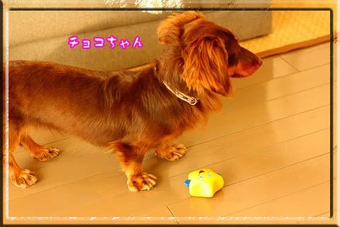 081101チョコちゃん来訪