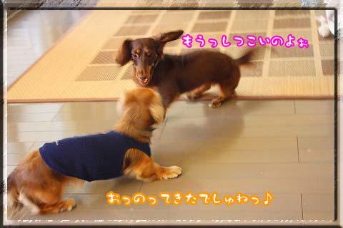 081101チョコ反撃っ!