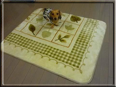 リメイク絨毯