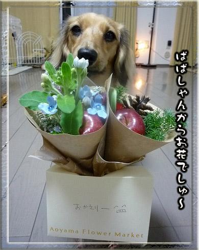 081224お花貰った