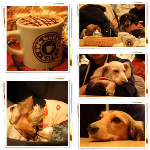DOG GARDEN CAFE