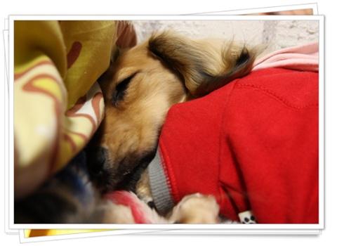 おやすみぃ・・・・・