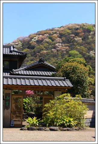 090410山桜