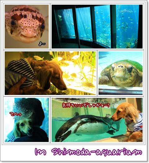 090411下田海中水族館