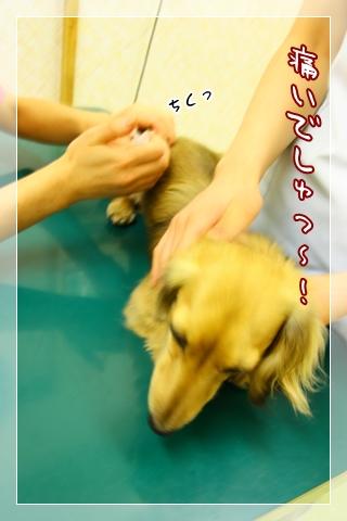 090501狂犬病